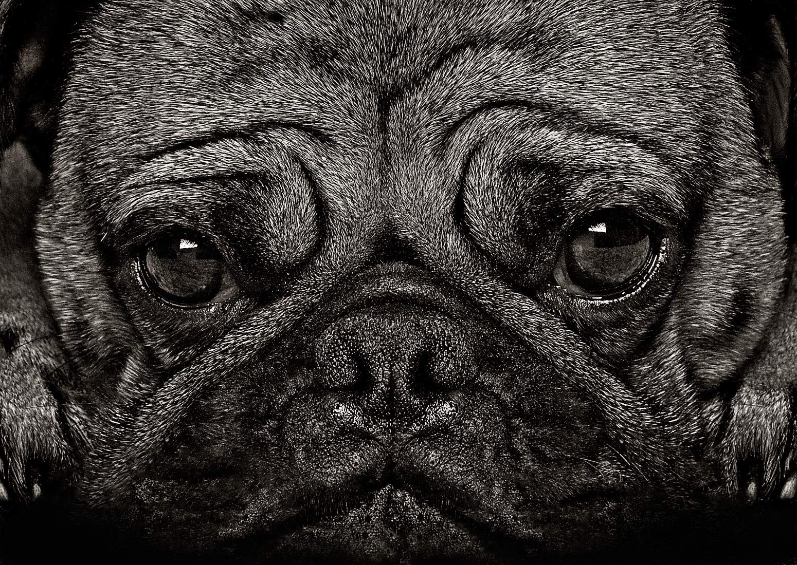 Dog portrait photography by Vancouver portrait photographer Waldy Martens